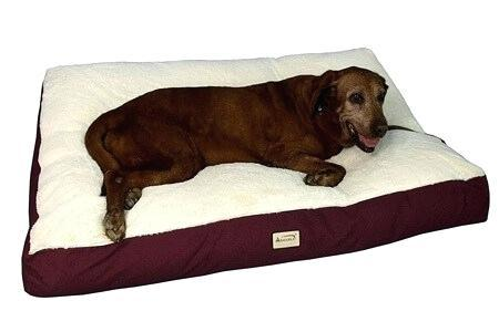 top rated dog beds top rated orthopedic dog beds australia
