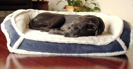 top rated dog beds top rated dog beds for small dogs