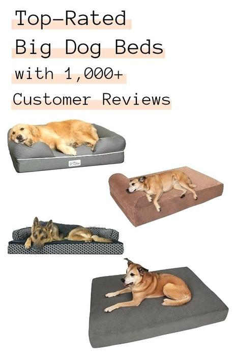 top rated dog beds best dog beds for senior dogs