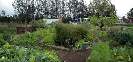 La ferme Purple Pear en permaculture et biodynamie (vidéo)