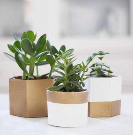 cache pot carton récup bicolore doré blanc bande couleurs plantes grasses - blog déco - clem around the corner