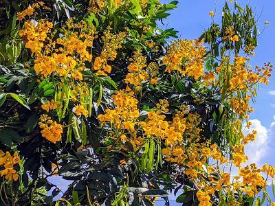 Fleurs et fruits de l'Equateur (1) Blumen und Früchten in Ecuador gesehen