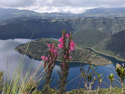 Fleurs et fruits de l'Equateur (2) Blumen und Früchten in Ecuador gesehen