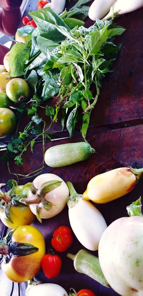 Les légumes biologiques et savoureux de Wim - Busua