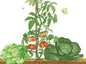astuces pour faire manger légumes enfants.