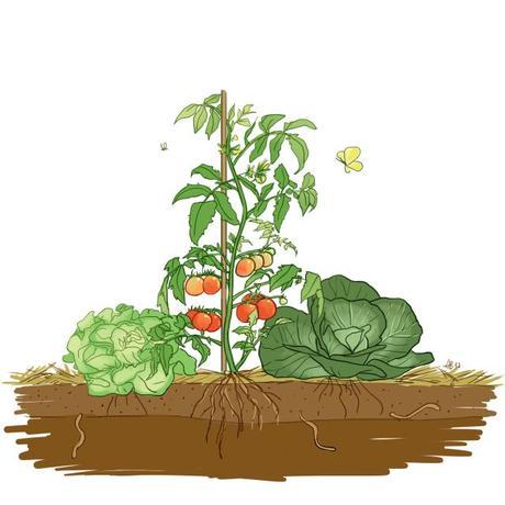 Mes 3 astuces pour faire manger des légumes à mes enfants.