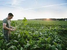 Français : le plus grand consommateur d'aliments bio