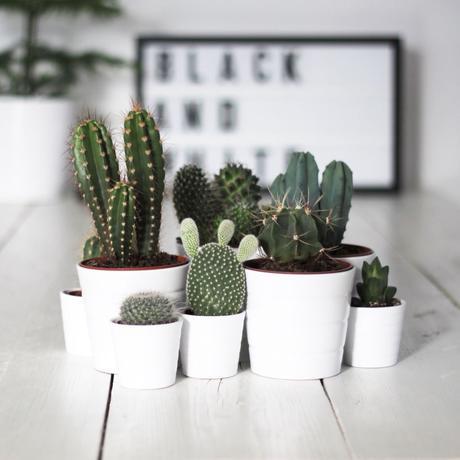 petit cactus pot blanc déco salon style scandinave