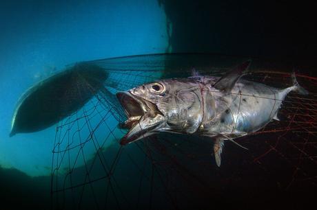 Découvrez les lauréats 2020 du concours The Underwater Photographer