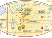 #trendsinendocrinologyandmetabolism #SOPK #inositols Inositols Syndrome Ovaires Polykystiques