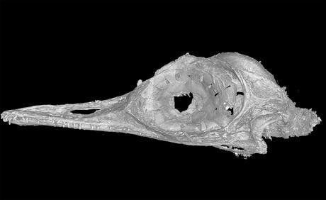 Découverte d'un crâne de dinosaure vieux de 99 millions d'années