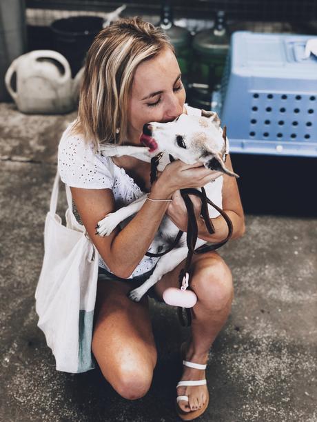 Mon avis sur la compagnie Goldenway Pets pour le voyage de mon chien vers l'Australie