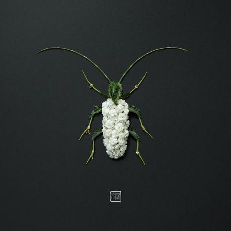 Raku Inoue créé des animaux et des insectes à l'aide de végétaux.
