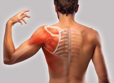 Des omoplates douloureuses ? Cherchez les causes et changez de mode de vie
