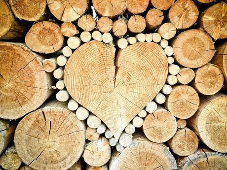 Découvrez le bois sous toutes ses formes