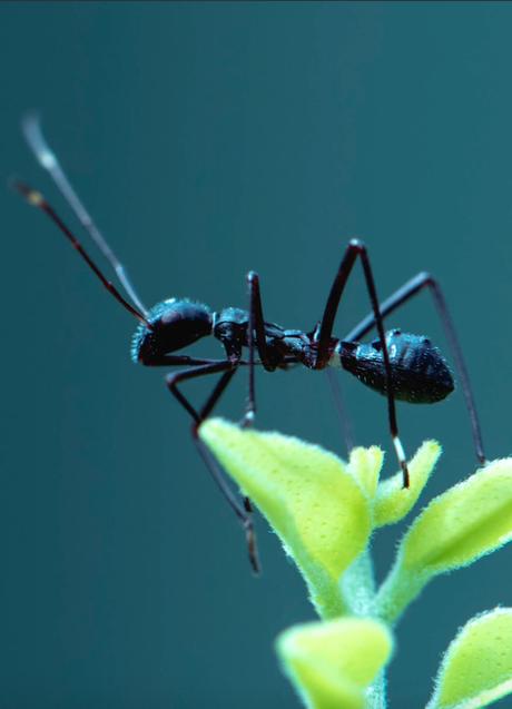 savon noir repousse les fourmis naturellement écoresponsable jardin - blog déco - clematc