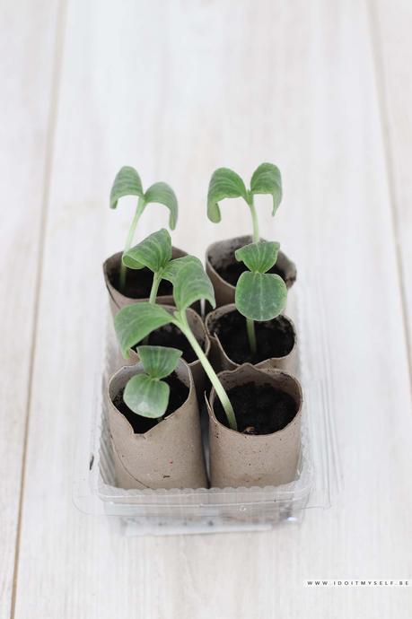 DIY : Pots pour semis Zéro déchets