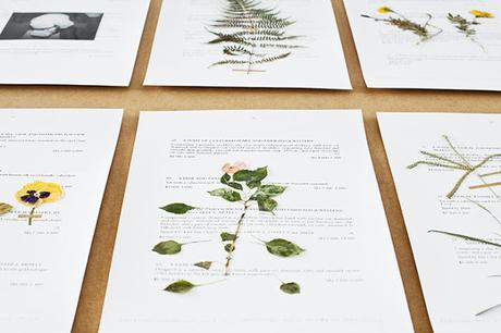 L'herbier de Camille Henrot