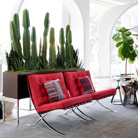 salon design assise cuir rouge pieds inoxcoussin cactus - blog déco - clematc