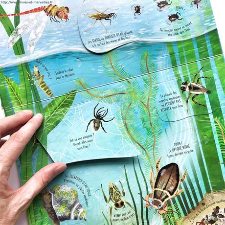 Fenêtre sur papillons et autres petites bêtes
