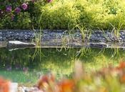 Piscines naturelles parfaitement intégrées dans jardin