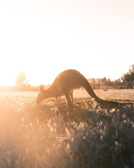 // VOYAGE // S'évader virtuellement du quotidien : les plus beaux endroits d'Australie