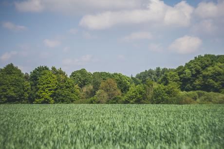 À 1 km de chez moi, dans ma campagne bretonne.