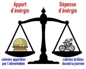 Étude déficit calorique et thermogenèse adaptative