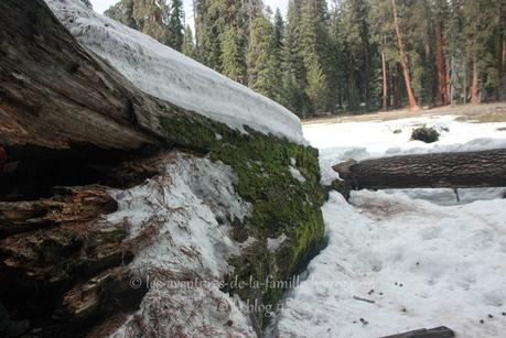 Sequoia National Park : Big Trees Trail