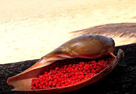 Busua - A natural relaxing seeds and shell finger - un relaxe doigt naturel