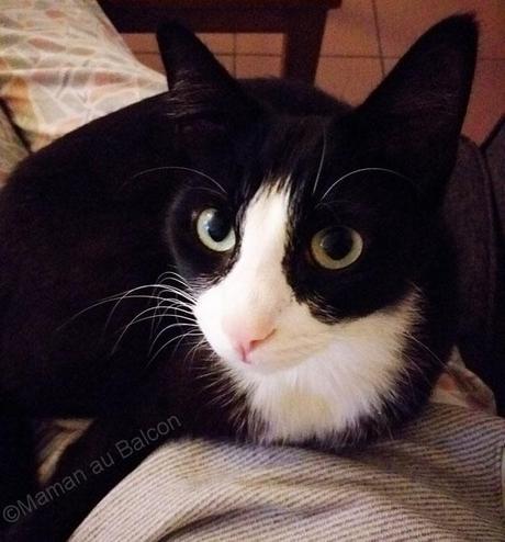 Penny notre chat et quelques conseils avant d'adopter un chat