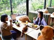 Japon peluches géantes dans restaurant pour faire respecter distanciation sociale