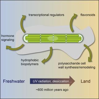 #Cell #génomique #colonisation #penium #pmargaritaceum Génome de Penium margaritaceum et étapes des origines des plantes terrestres
