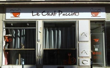 Sauvons le Chat Puccino à Rennes !