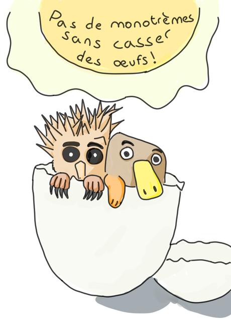 Pas de monotrèmes sans casser des œufs