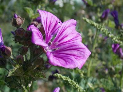 Le grand moment des fleurs au jardin