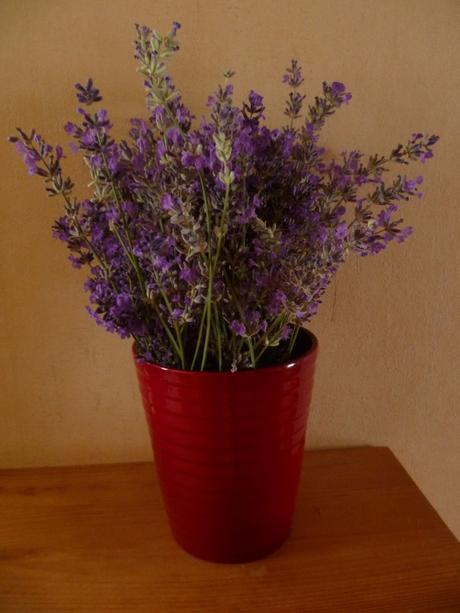 fleurs,plantes,rose,lavande,jardin,jardinage,printemps