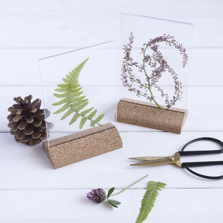 herbier vitre socle naturel feuille verte table en bois blanc