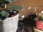 conseils pour votre chat arrête détruire plantes vertes