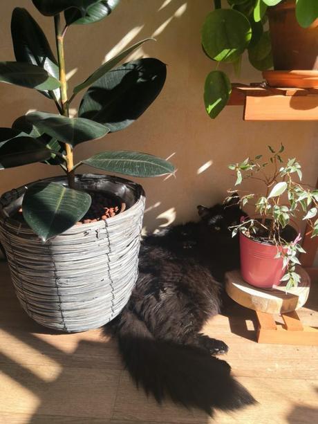 5 conseils pour que votre chat arrête de détruire vos plantes vertes