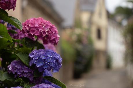 Saint-Goustan et ses fleurs