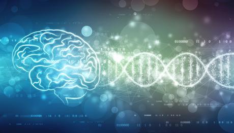 Cette première cartographie de l'expression des gènes du cerveau en dit long sur l'évolution cérébrale humaine (AdobeStock_218724187)