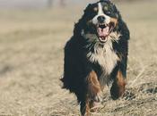 Comment faire fonctionner collier pour chien
