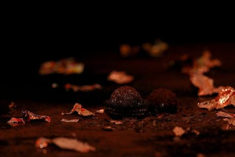 Comment intégrer la truffe dans un dessert ?