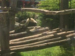 ZooParc de BEAUVAL à Saint-Aignan sur cher