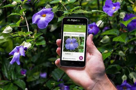 Identifier une plante à partir d'une photo