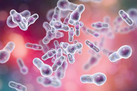 Les dommages intestinaux associés à C. difficile sont causés par la plasmine et non par une toxine (Visuel AdobeStock_186445101)
