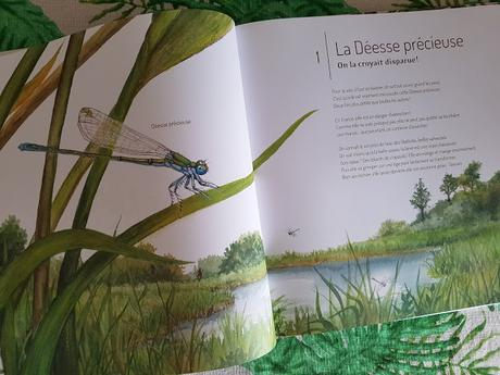 21 Petites histoires naturelles - Les insectes de Claire Lecoeuvre et Capucine Mazille