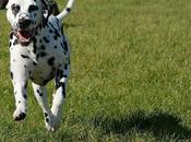 Comment retrouver chien