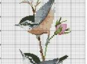 chant oiseaux